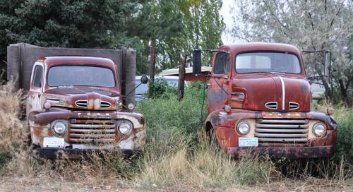 1950 Ford trucks